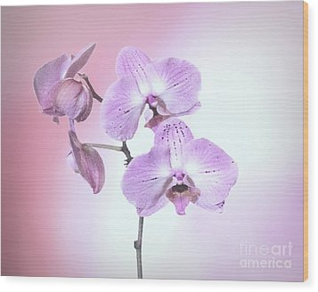 Wood Print featuring the photograph Dreamy Pink Orchid by Linda Phelps