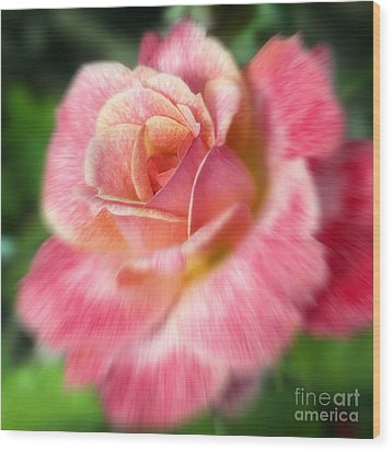 Dreamy Rose Wood Print by Jeannie Burleson