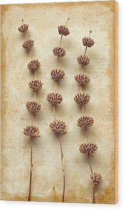 Dried Sage Wood Print