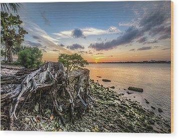 Wood Print featuring the photograph Driftwood At The Edge by Debra and Dave Vanderlaan