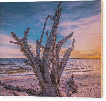 Wood Print featuring the photograph Driftwood Beach by Steven Ainsworth