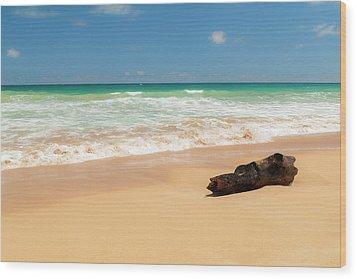 Driftwood Wood Print by Brian Harig