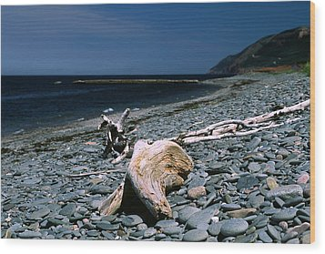 Driftwood On Rocky Beach Wood Print by Sally Weigand