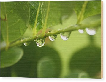 Drip Drop Wood Print by Bradley Nichol