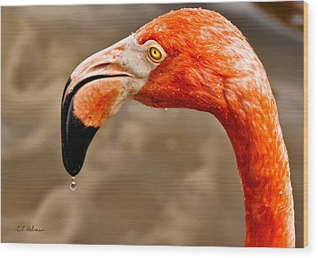 Dripping Flamingo Wood Print by Christopher Holmes