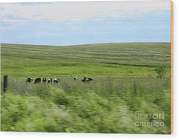 Driveby Shooting No.17 Cows Wood Print by Christine Segalas