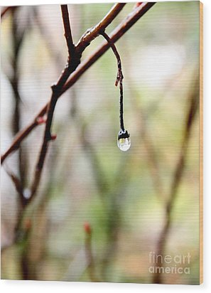 Drop Of Rain Wood Print