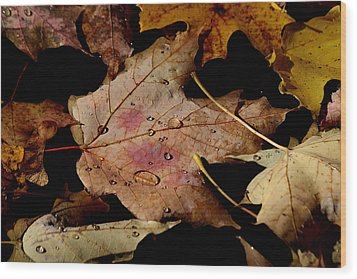 Wood Print featuring the photograph Droplets On Fallen Leaves by Doris Potter