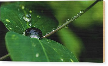 Wood Print featuring the photograph Droplets On Stem And Leaves by Darcy Michaelchuk