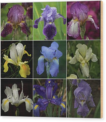 Drops Of Iris -- A Collage Wood Print by Richard Cummings