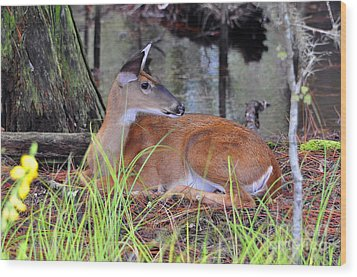 Wood Print featuring the photograph Drowsy Deer by Al Powell Photography USA