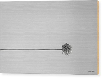 Dry Flower - Black And White Art Photo Wood Print by Modern Art Prints