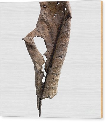 Dry Leaf Wood Print by Bernard Jaubert