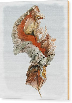 Wood Print featuring the photograph Dry Leaf by Vladimir Kholostykh