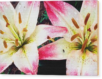 Dual Pinks II Wood Print by Amanda Kiplinger