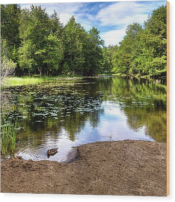 Wood Print featuring the photograph Duck At Covewood by David Patterson