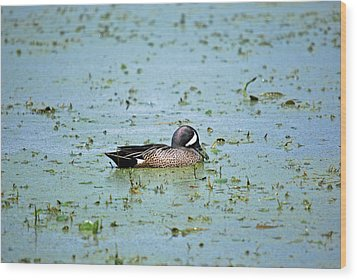 Wood Print featuring the photograph Duck Bluegreen by Teresa Blanton