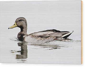 Duck Wood Print by John Hix