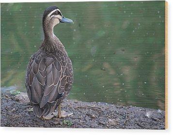 Duck Look Wood Print
