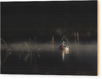 Wood Print featuring the photograph Duck Of The Morning Mist by Bill Wakeley
