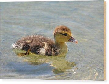 Duckling 7 Wood Print
