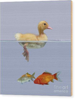 Duckling And Goldfish Wood Print by Jane Burton