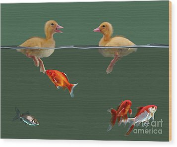 Ducklings And Goldfish Wood Print by Jane Burton