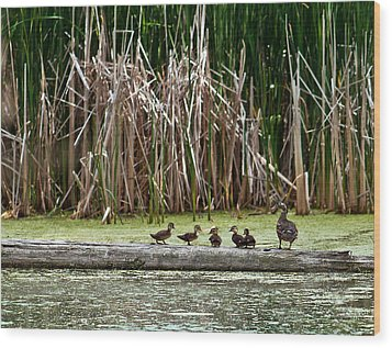 Ducks All In A Row Wood Print by Edward Peterson