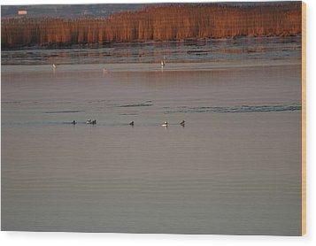 Ducks Wood Print by Marc Van Pelt