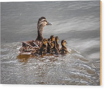 Ducky Daycare Wood Print by Sumoflam Photography
