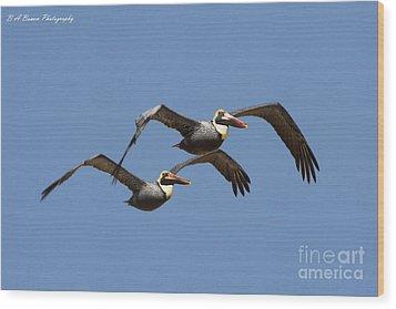 Duel Pelicans In Flight Wood Print