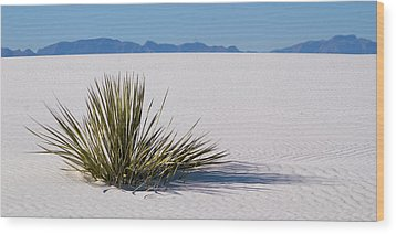 Dune Plant Wood Print by Marie Leslie
