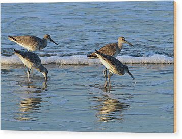Dunking Willets Wood Print by Bruce Gourley