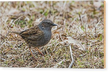 Wood Print featuring the photograph Dunnock by Torbjorn Swenelius