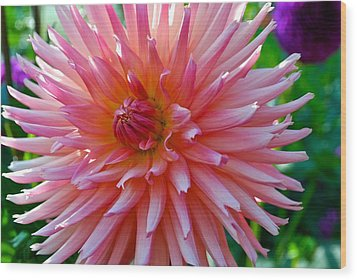 Dusty Rose Dahlia  Wood Print