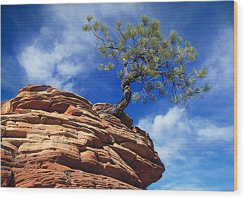 Dwarf Pine And Sandstone Zion Utah Wood Print by Utah Images