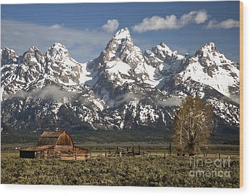 Dwarfed By The Teton Mountain Ange Wood Print by Adam Jewell