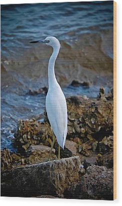 Eager Egret Wood Print by DigiArt Diaries by Vicky B Fuller