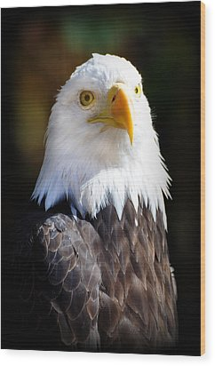 Eagle 14 Wood Print by Marty Koch