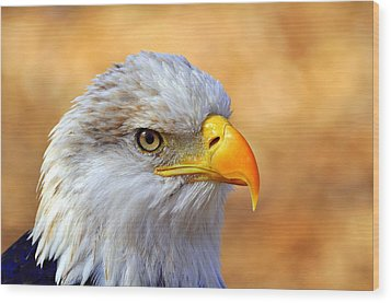 Eagle 7 Wood Print by Marty Koch