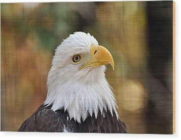 Eagle 9 Wood Print by Marty Koch