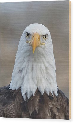 Wood Print featuring the photograph Eagle Attitude by Angie Vogel