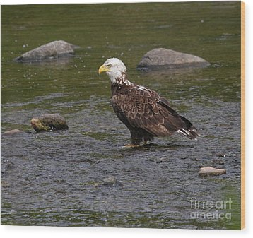 Wood Print featuring the photograph Eagle Deep In Thought by Debbie Stahre