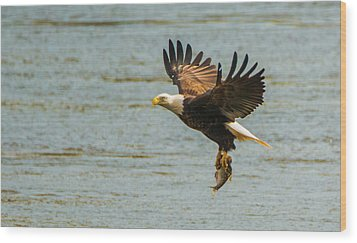 Eagle Departing With Prize Close-up Wood Print