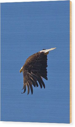 Wood Print featuring the photograph Eagle Dive by Linda Unger