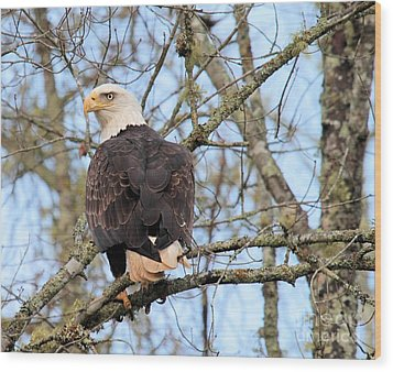 Eagle Eye On You  Wood Print by Debbie Stahre