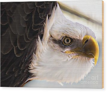 Eagle Eye Wood Print