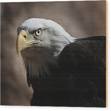 Wood Print featuring the photograph Eagle Eyed by Marie Leslie