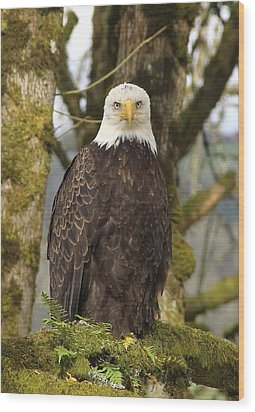 Eagle Eyes Wood Print by Angie Vogel