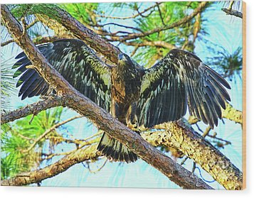 Wood Print featuring the photograph Eagle Fledgling II 2017 by Deborah Benoit